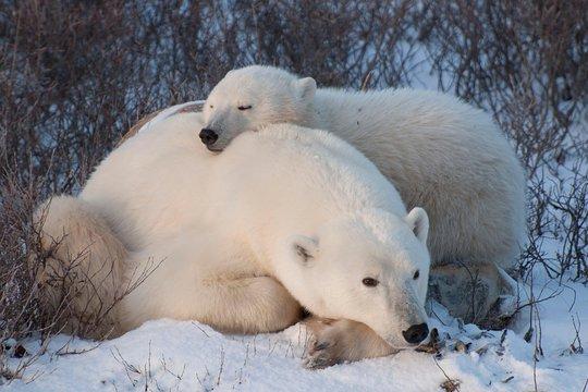 polar bear tours churchill reviews