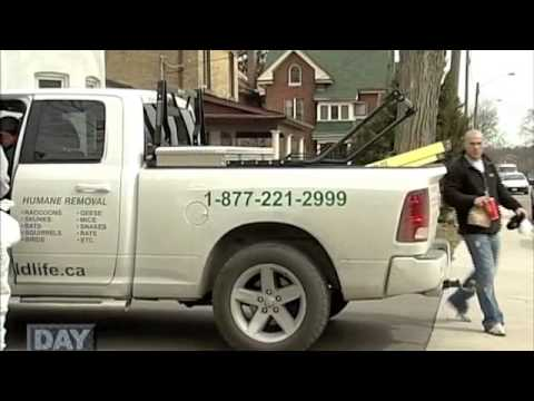 all wildlife removal inc reviews