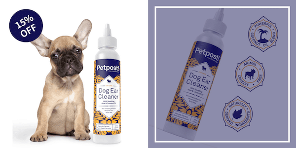 best dog ear cleaner reviews